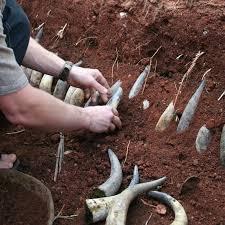 Ett av de biodynamiska preparaten, gödselfyllda kohorn iordningställs.